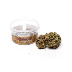 Strawberry Fields Seminata Cannabis Sativa Light 2 gr